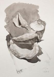 """Shells - I"" ink, 50 x 35, 2012"