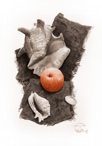 """Shells & red apple"" ink, 50 x 35, 2012"
