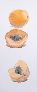"""Apricot Etude"" watercolor on paper, 23 x 9, 2013"