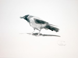 """Ravens & Crows"" sketch #1, watercolor, 30 x 40, 2014"