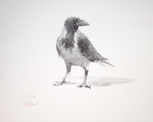 """Ravens & Crows"" sketch #5, watercolor, 30 x 40, 2014"
