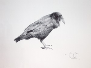 """Ravens & Crows"" sketch #6, watercolor, 30 x 40, 2014"