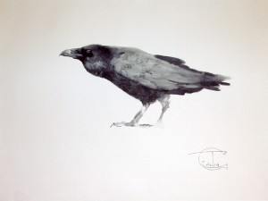 """Ravens & Crows"" sketch #8, watercolor, 30 x 40, 2014"
