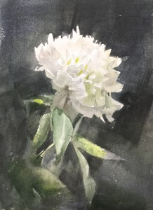 """White peony"" watercolor on paper, 24x17, 2020"